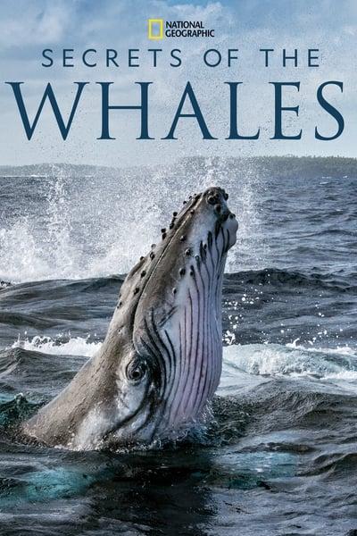 Secrets of the Whales S01E04 Ocean Giants DSNP WEB-DL DDP5 1 H 264-LAZY