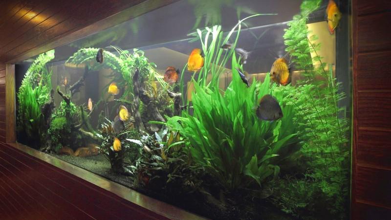 Замовити акваріум