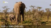 Почти человек. Жизнь слона / An Elephant's World (2017) HDTV 1080i