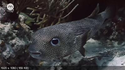 Подводный мир Эксумы / Exuma (2013) HDTV 1080p