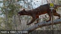 Мадагаскар: Африканский Галапагос / Madagascar: Africa's Galapagos (2019) HDTV 1080i