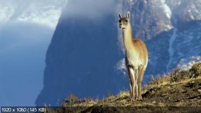 Дикая природа Чили / Wild Chile (2017) WEB-DL 1080p