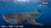 Галапагос. Царство гигантских акул / Galapagos: Realm of Giant Sharks (2012) HDTV 1080i
