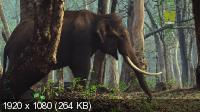 Дикий штат Карнатака, Индия / India's Wild Karnataka (2020) HDTV 1080i