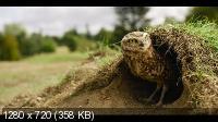 Крошечные существа / Tiny Creatures (2020) WEBRip 720p