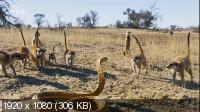 Враждебная планета: Африка (2020) HDTV