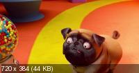 Союз зверей: Спасение двуногих / Pets United (2019/WEB-DL/WEB-DLRip)