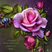 Moonbeams Rose Romantica