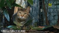 Как собаки и кошки захватили мир / How Dogs And Cats Conquered The World (2020) HDTVRip 720p