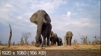 Враждебная планета: Африка / Hostile Planet: Africa (2020) HDTV 1080i
