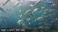 Большой Барьерный риф: Живое сокровище / Great Barrier Reef: A Living Treasure (2020) DVB