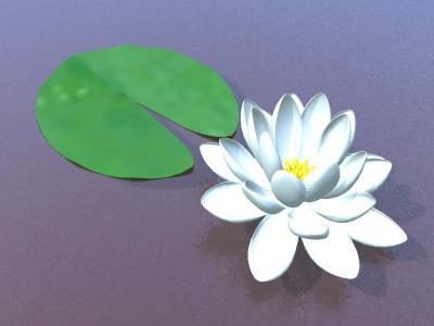 Цветы Ca91079b65e9cd5fe2fdcd06e903771e