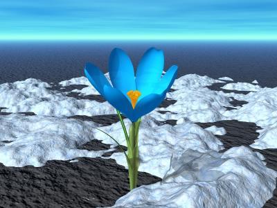 Цветы D851d4f06b4a06961c41d2f0be9a6ca9
