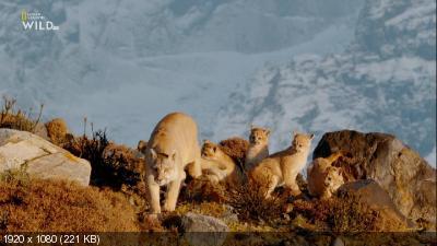 Пумы на краю света / Pumas At The End of The World (2020) HDTV 1080i