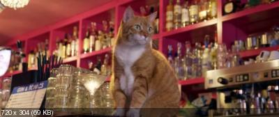 Город глазами кота / Katwalk (2018) WEB-DLRip