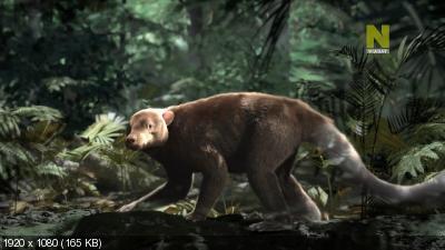 Расцвет млекопитающих / Rise of the Mammals (2019) HDTV 1080i