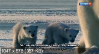 Звери в снегу / Зимняя сказка для зверей / Snow Animals (2019) DVB