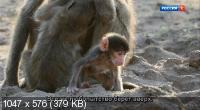 Маленький бабуин и его семья / Bébé babouin et son drôle de clan (2018) DVB