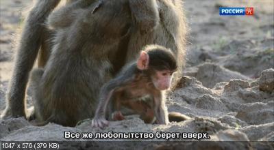 Маленький бабуин и его семья / Bebe babouin et son drole de clan (2018) DVB