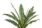 PHOTOBASH - PREHISTORIC PLANTS