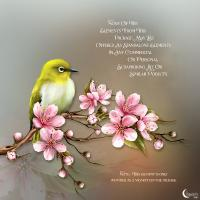 Renderosity - Moonbeam's Cherry Blossoms