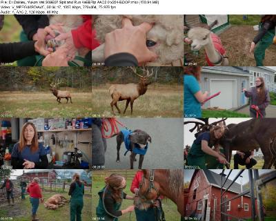 Dr Oakley, Yukon Vet S09E07 Spit and Run WEBRip AAC2 0 x264-BOOP