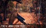 Wallapack Various & Amazing HD by Leha342 05.05.2021